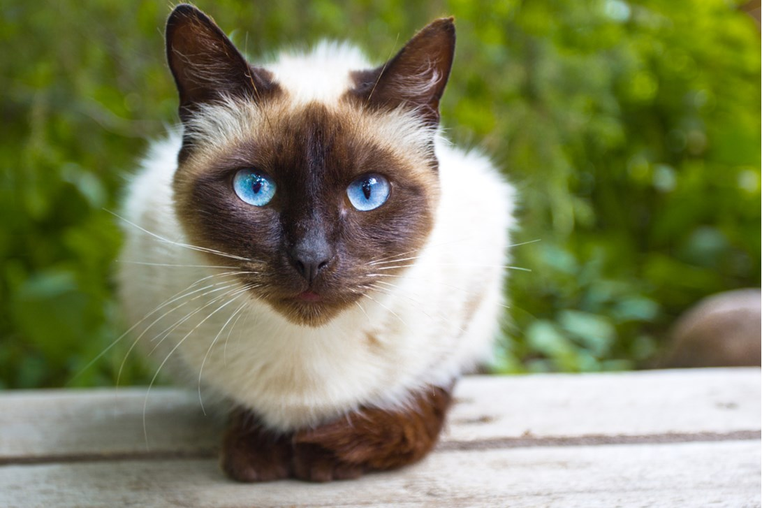 Best Hypoallergenic Cats Trusens Wellness